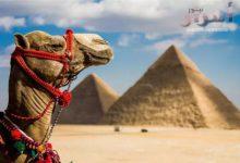 صورة .إليكم أفضل فرص عمل جديدة للشباب من خلال تطوير السياحة المصرية